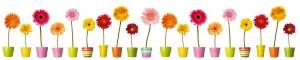 fleurs-et-pots-colores_1
